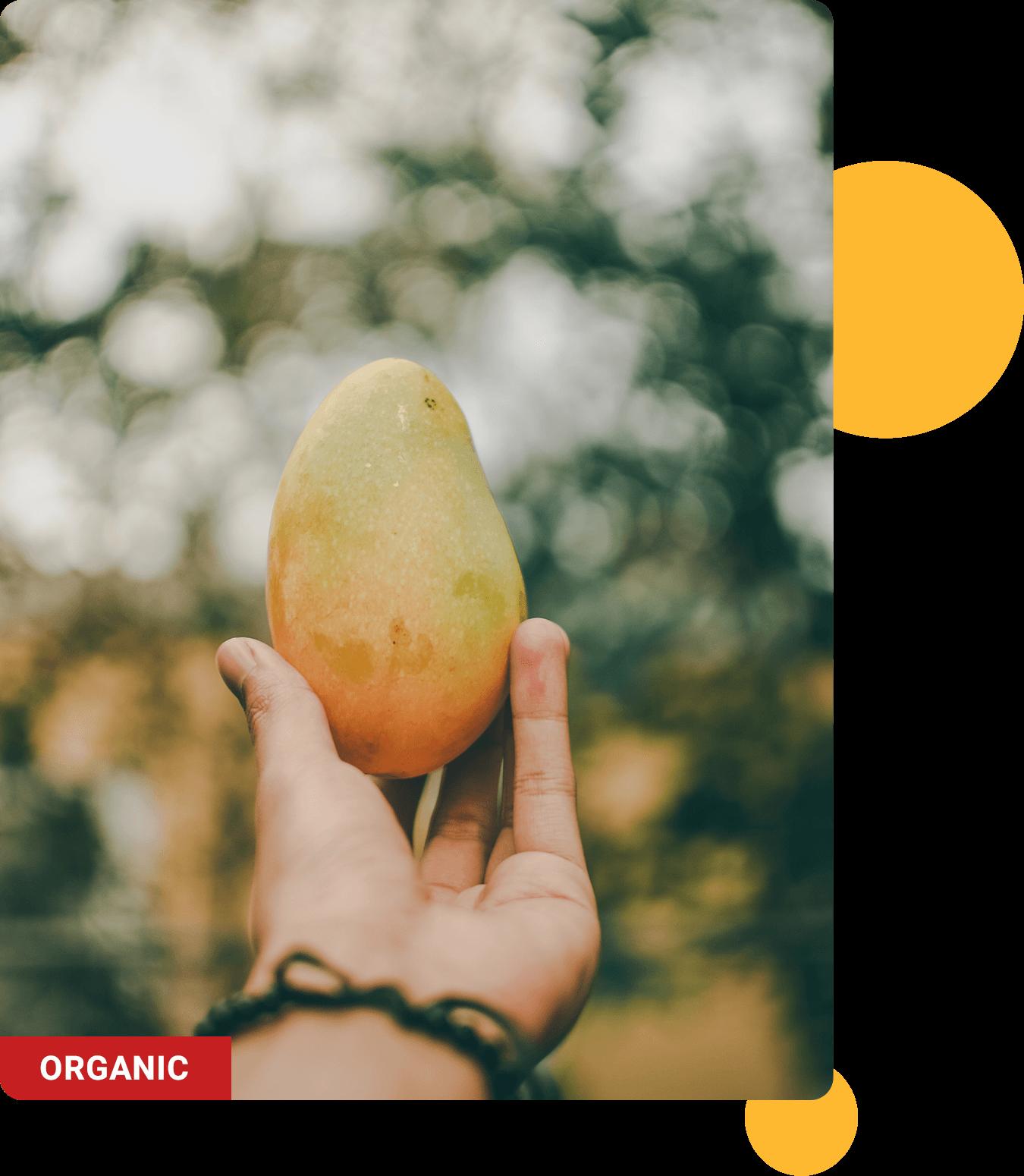 Best tasting mango fruits in your Gin Hass Original, organic